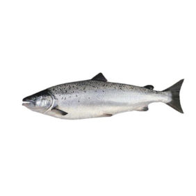 Foto: Veiledning Produktark Biomark PIT tags for elektronisk merking av fisk