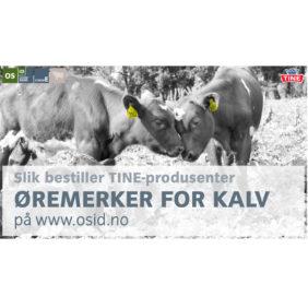 Foto: Veiledning Slik bestiller TINE-produsenter offisielle øremerker for kalv