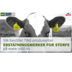 Foto: Veiledning Slik bestiller TINE-produsenter erstatningsmerker for storfe