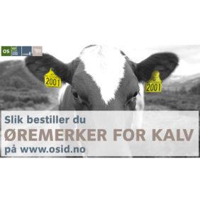 Foto: veiledning: Slik bestiller du øremerker for kalv