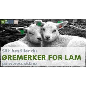 Foto: Veiledning slik bestiller du øremerker for lam