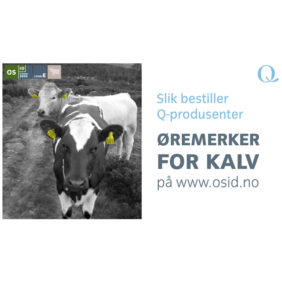 Foto: Veiledning Slik bestiller Q-produsenter øremerker for kalv
