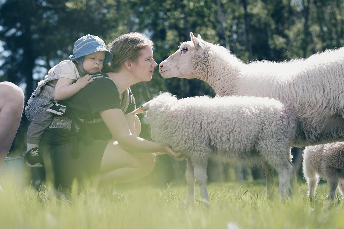 Foto: Sau bønder familie sommer