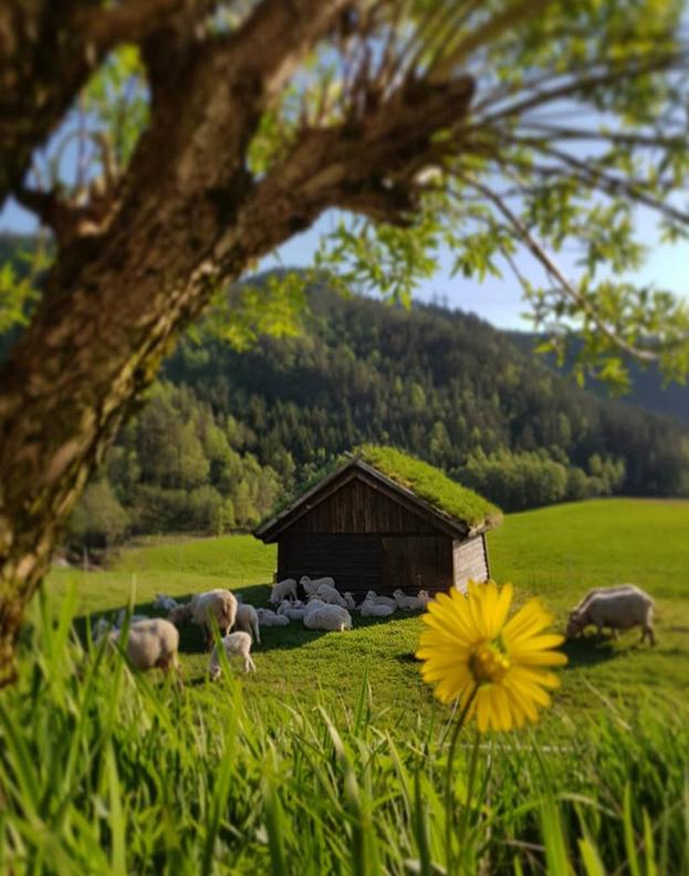 Foto: En hyllest til våren