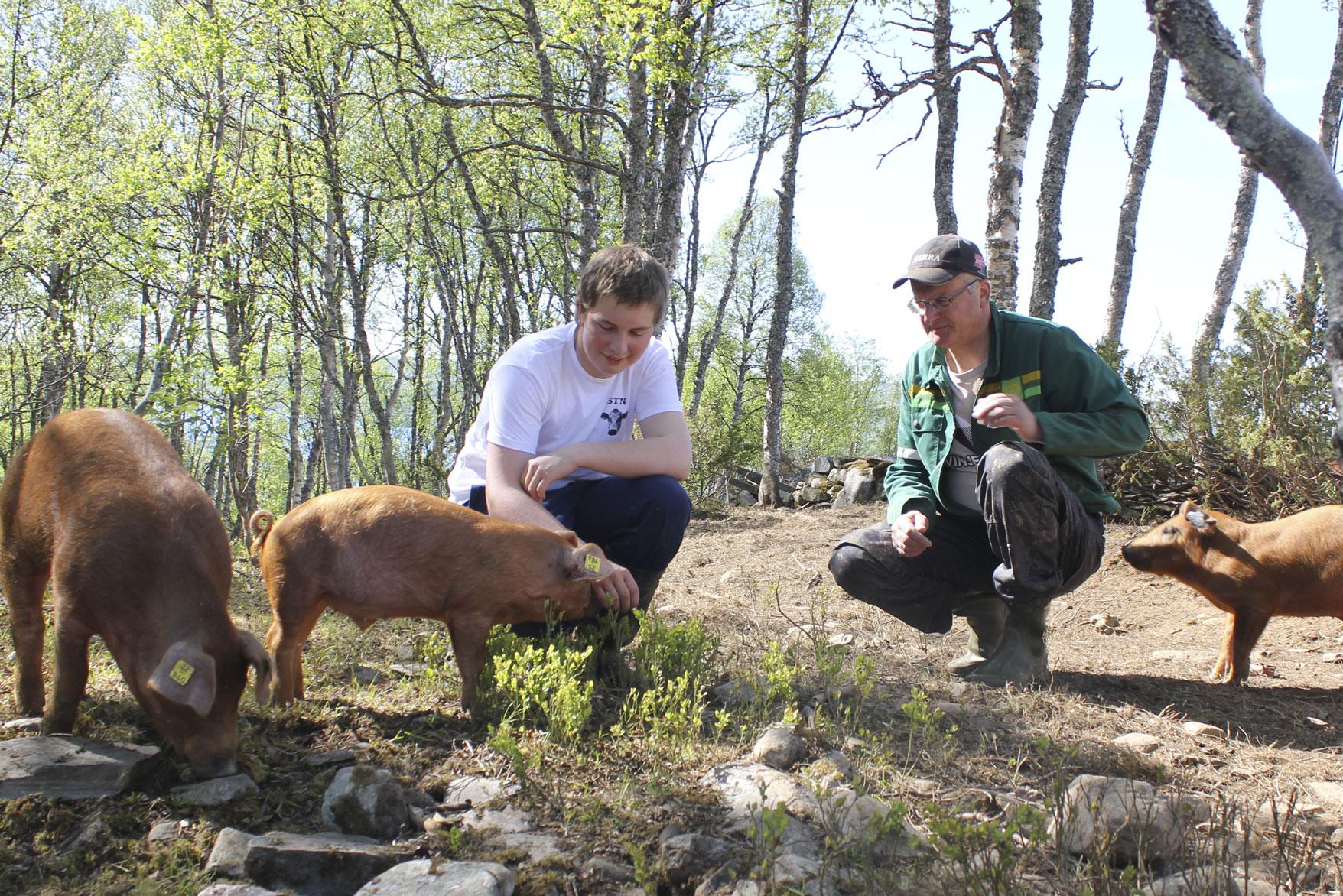 Fra bank til bacon