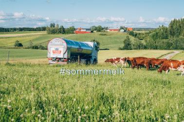 oto thumbnail : Sommermelk lønner seg!